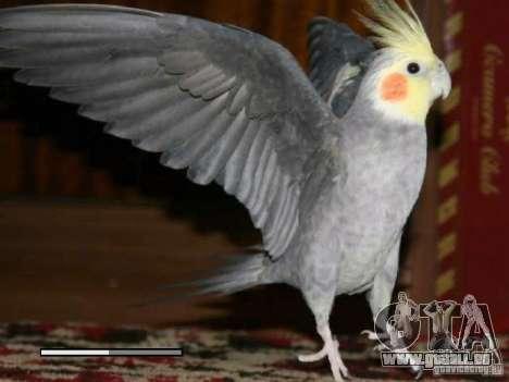 Boot Bildschirm Papageien Papagei beta für GTA San Andreas sechsten Screenshot