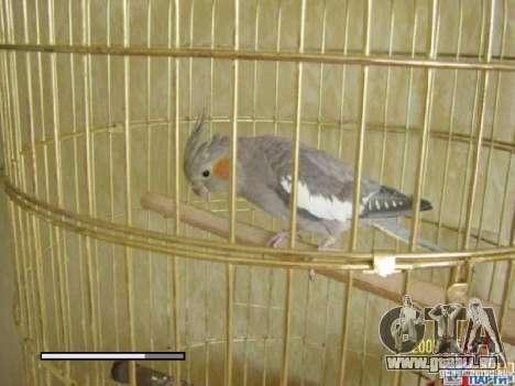 Boot Bildschirm Papageien Papagei beta für GTA San Andreas neunten Screenshot