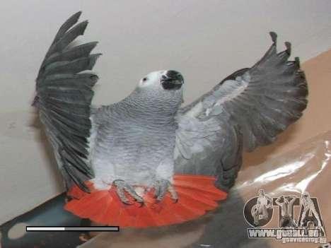 Bêta de Boot écran perroquet perroquets pour GTA San Andreas troisième écran