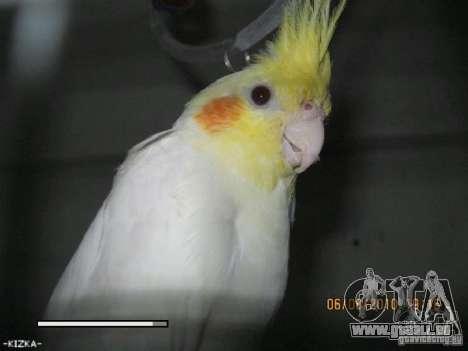 Boot Bildschirm Papageien Papagei beta für GTA San Andreas siebten Screenshot