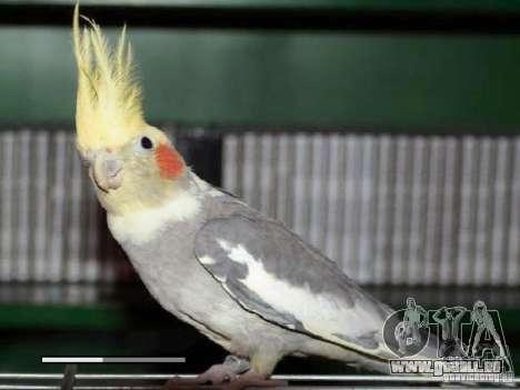 Boot Bildschirm Papageien Papagei beta für GTA San Andreas fünften Screenshot