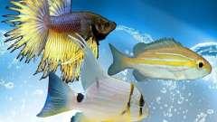 Nouveaux poissons (océan) pour GTA San Andreas