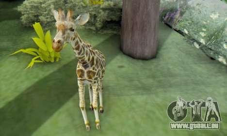 Giraffe (Mammal) pour GTA San Andreas quatrième écran