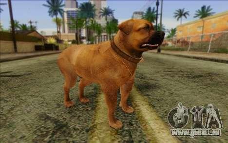 Rottweiler from GTA 5 Skin 2 pour GTA San Andreas