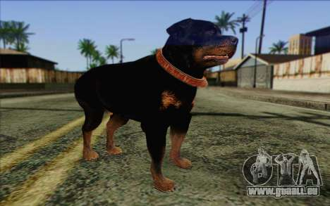 Rottweiler from GTA 5 Skin 3 pour GTA San Andreas
