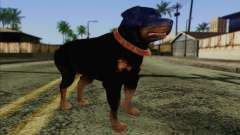 Rottweiler from GTA 5 Skin 3