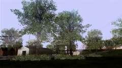 La texture des arbres de MGR